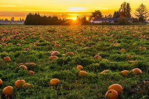 Иммиграция в Саскачеван: рекордный октябрь в истории