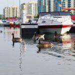 Иммиграция в Канаду — Дайджест новостей за 25 апреля-1 мая