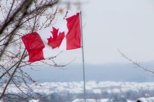 Канада выпустила 39901 положительных LMIA в первом квартале 2020 года