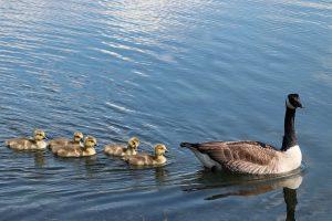 Ньюфаундленд и Лабрадор выпустили новый иммиграционный отчет