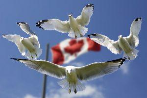 Канада выдала 25575 разрешений на работу в H&C в 2020