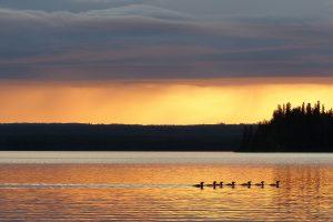 Иммиграция в Саскачеван 534 приглашений в новом отборе SINP