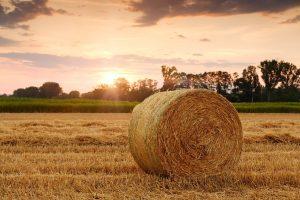 Мексиканские сезонные сельскохозяйственные рабочие в Онтарио