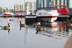 Онтарио пригласило 648 человек в двух потоках OINP